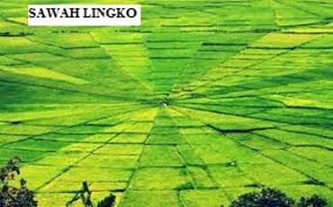 Sawah Lingko